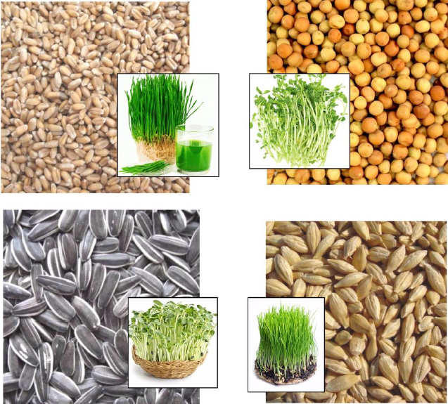 Growing Fodder as a Supplement for Animal Feed