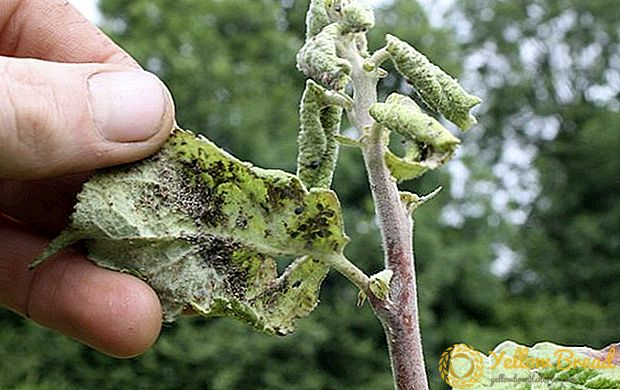 Tree Treatment for Diseases and Pests