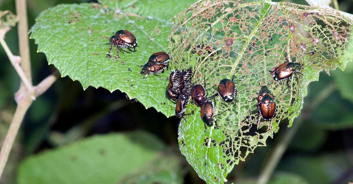 Pest Management - Cultural and Mechanical practices